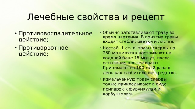 Лечебные свойства и рецепт Противовоспалительное действие; Противорвотное действие; Обычно заготавливают траву во время цветения. В понятие травы входят стебли, цветки и листья. Настой: 1 ст. л. травы скерды на 250 мл кипятка настаивают на водяной бане 15 минут, после остывания процеживают. Принимают по 100 мл 2 раза в день как слабительное средство. Измельченную траву скерды также прикладывают в виде припарок к фурункулам и карбункулам.