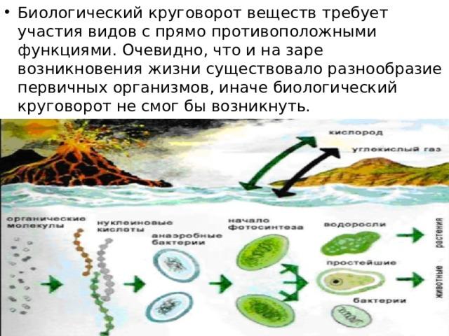 Биологический круговорот веществ требует участия видов с прямо противоположными функциями. Очевидно, что и на заре возникновения жизни существовало разнообразие первичных организмов, иначе биологический круговорот не смог бы возникнуть.