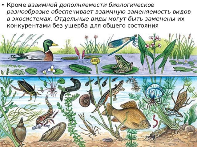 Кроме взаимной дополняемости биологическое разнообразие обеспечивает взаимную заменяемость видов в экосистемах. Отдельные виды могут быть заменены их конкурентами без ущерба для общего состояния экосистемы.