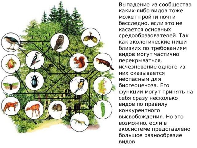 Выпадение из сообщества каких-либо видов тоже может пройти почти бесследно, если это не касается основных средообразователей. Так как экологические ниши близких по требованиям видов могут частично перекрываться, исчезновение одного из них оказывается неопасным для биогеоценоза. Его функции могут принять на себя сразу несколько видов по правилу конкурентного высвобождения. Но это возможно, если в экосистеме представлено большое разнообразие видов