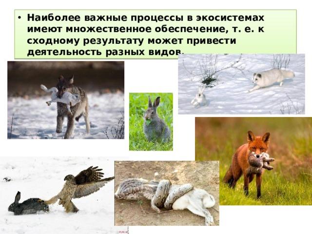 Наиболее важные процессы в экосистемах имеют множественное обеспечение, т. е. к сходному результату может привести деятельность разных видов.