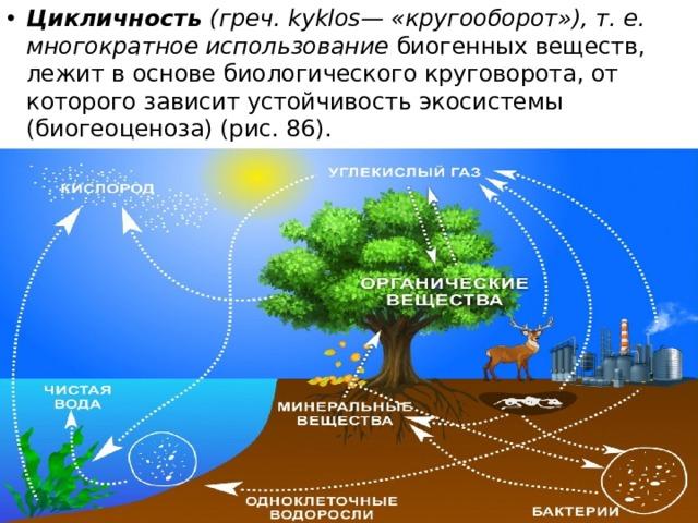 Цикличность (греч. kyklos— «кругооборот»), т. е. многократное использование биогенных веществ, лежит в основе биологического круговорота, от которого зависит устойчивость экосистемы (биогеоценоза) (рис. 86).
