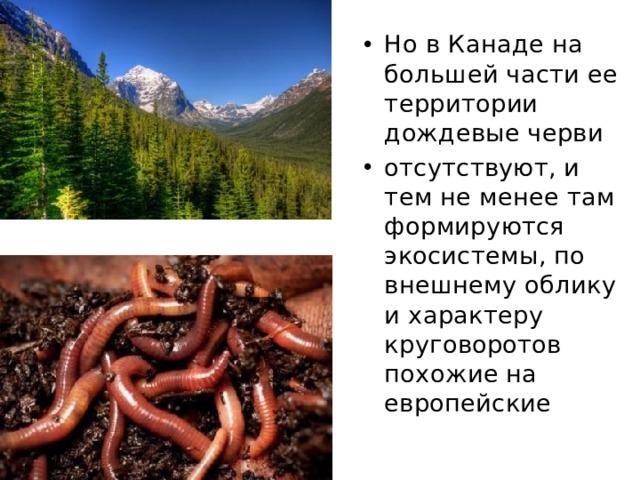 Но в Канаде на большей части ее территории дождевые черви отсутствуют, и тем не менее там формируются экосистемы, по внешнему облику и характеру круговоротов похожие на европейские