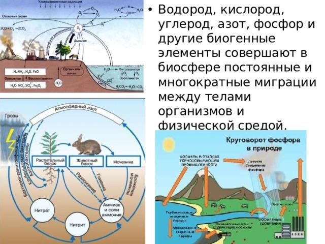 Водород, кислород, углерод, азот, фосфор и другие биогенные элементы совершают в биосфере постоянные и многократные миграции между телами организмов и физической средой.