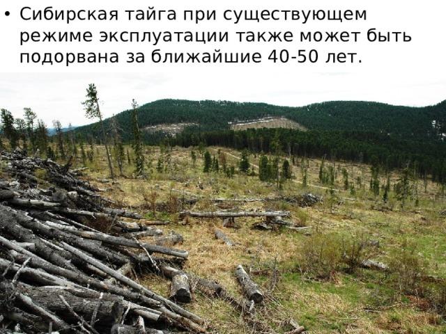 Сибирская тайга при существующем режиме эксплуатации также может быть подорвана за ближайшие 40-50 лет.