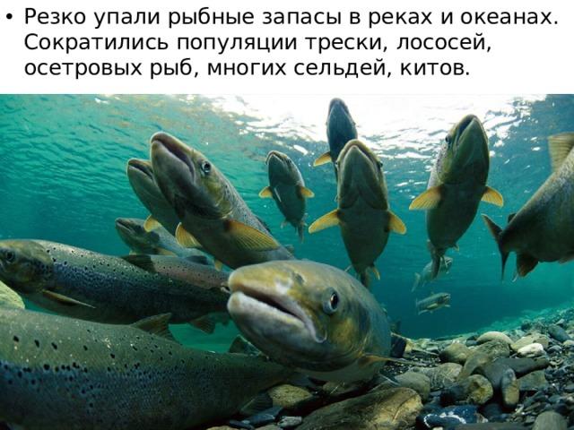 Резко упали рыбные запасы в реках и океанах. Сократились популяции трески, лососей, осетровых рыб, многих сельдей, китов.