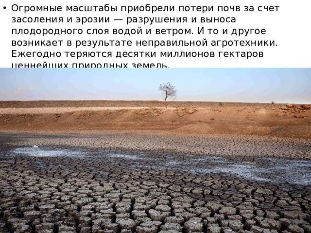 Огромные масштабы приобрели потери почв за счет засоления и эрозии — разрушения и выноса плодородного слоя водой и ветром. И то и другое возникает в результате неправильной агротехники. Ежегодно теряются десятки миллионов гектаров ценнейших природных земель.