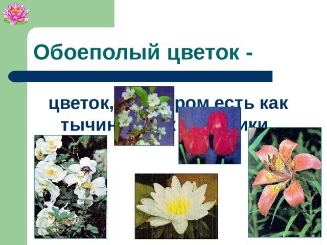 Обоеполый цветок - цветок, в котором есть как тычинки, так и пестики.