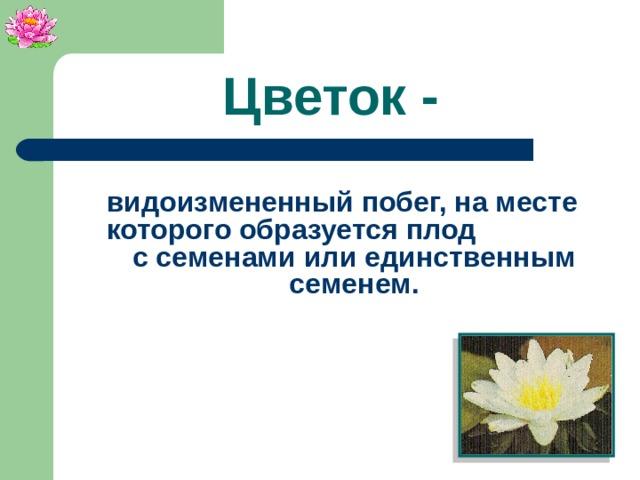 Цветок - видоизмененный побег, на месте которого образуется плод с семенами или единственным семенем.