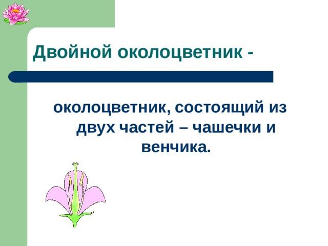 Двойной околоцветник - околоцветник, состоящий из двух частей – чашечки и венчика.