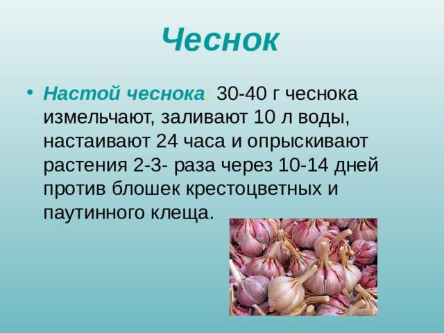 Чеснок Настой чеснока : 30-40 г чеснока измельчают, заливают 10 л воды, настаивают 24 часа и опрыскивают растения 2-3- раза через 10-14 дней против блошек крестоцветных и паутинного клеща.