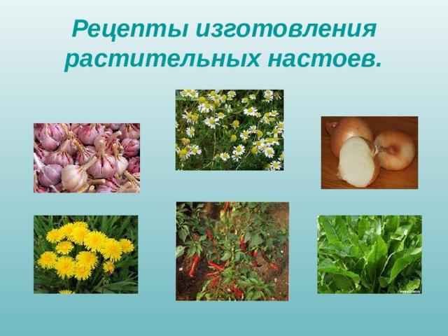 Рецепты изготовления растительных настоев.