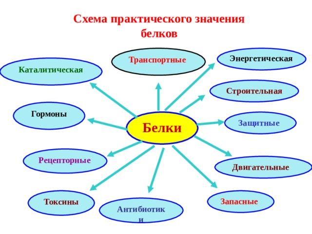 Схема практического значения белков  Транспортные Энергетическая Каталитическая Строительная  Гормоны Защитные Белки Рецепторные Двигательные Запасные Токсины Антибиотики