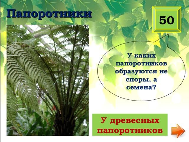 Папоротники 50 У каких папоротников образуются не споры, а семена?  У древесных папоротников