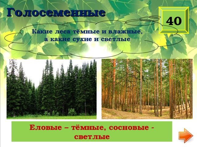 Голосеменные 40 Какие леса тёмные и влажные, а какие сухие и светлые Еловые – тёмные, сосновые - светлые