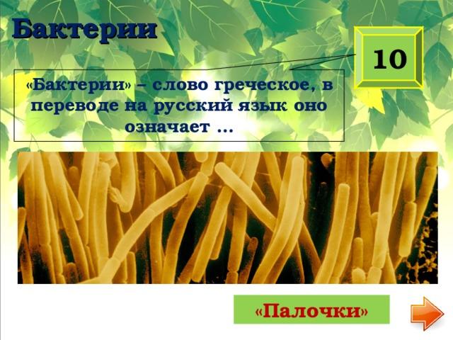 «Бактерии» – слово греческое, в переводе на русский язык оно означает … Бактерии 10 «Палочки»