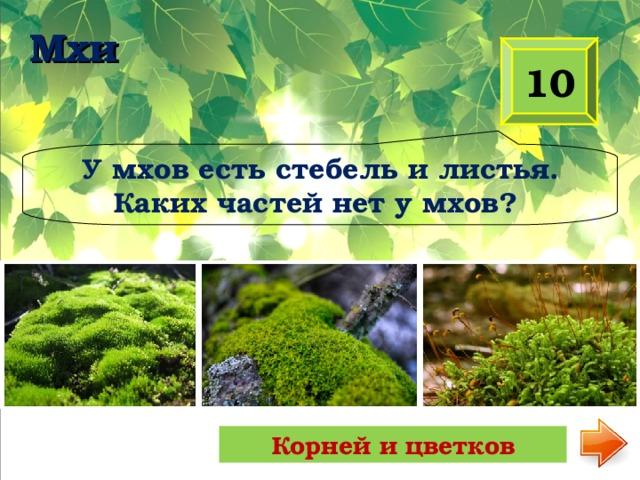 Мхи 10 У мхов есть стебель и листья. Каких частей нет у мхов? Корней и цветков