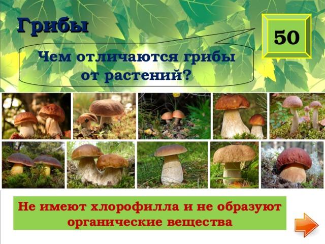 Грибы   50 Чем отличаются грибы от растений? Не имеют хлорофилла и не образуют органические вещества