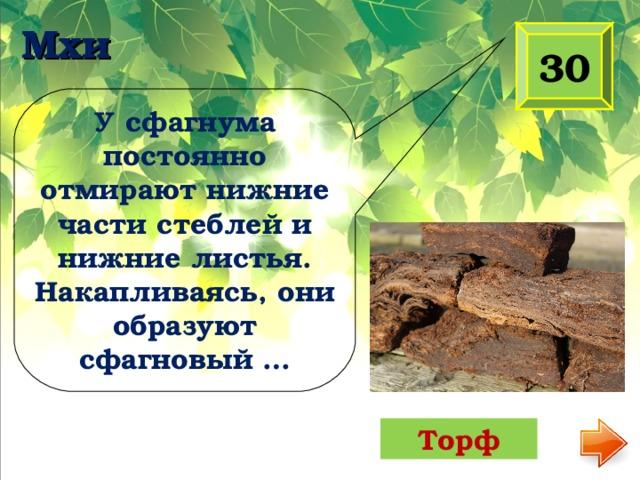 Мхи 30 У сфагнума постоянно отмирают нижние части стеблей и нижние листья. Накапливаясь, они образуют сфагновый … Торф