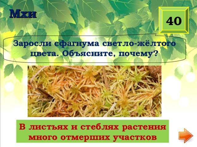 Мхи 40 Заросли сфагнума светло-жёлтого цвета. Объясните, почему? В листьях и стеблях растения много отмерших участков
