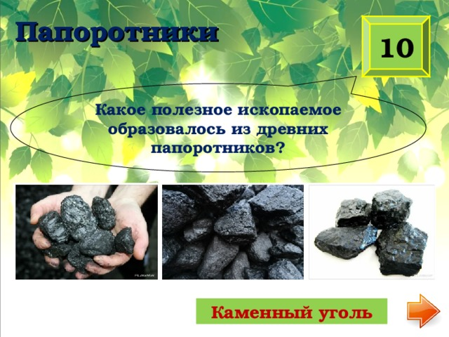 Папоротники 10 Какое полезное ископаемое образовалось из древних папоротников? Каменный уголь