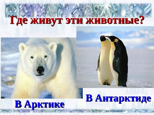 Где живут эти животные? В Антарктиде В Арктике