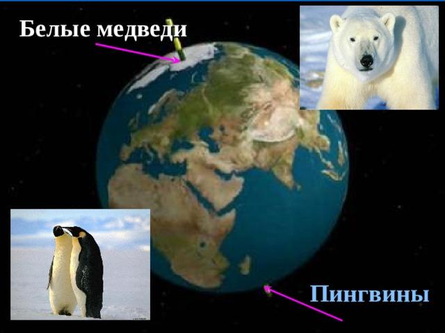 Белые медведи Пингвины