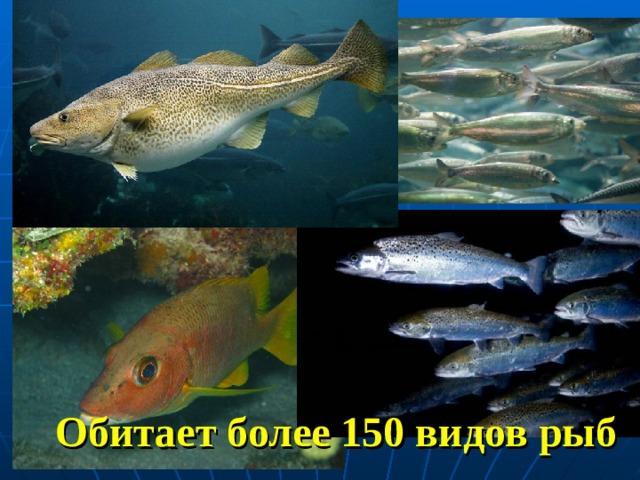 Обитает более 150 видов рыб