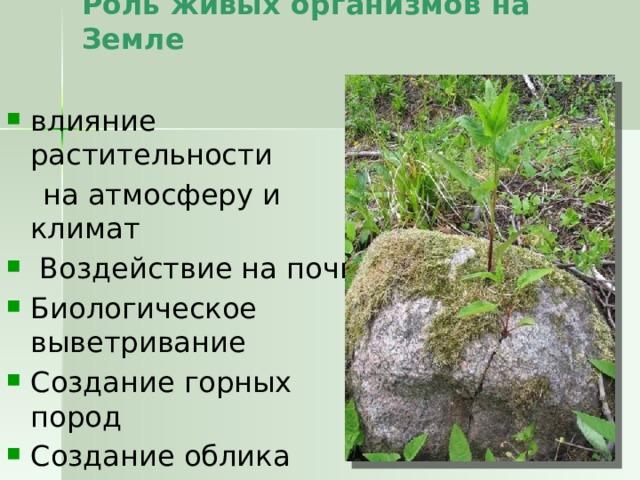 Роль живых организмов на Земле   влияние растительности  на атмосферу и климат  Воздействие на почву Биологическое выветривание Создание горных пород Создание облика ландшафтов