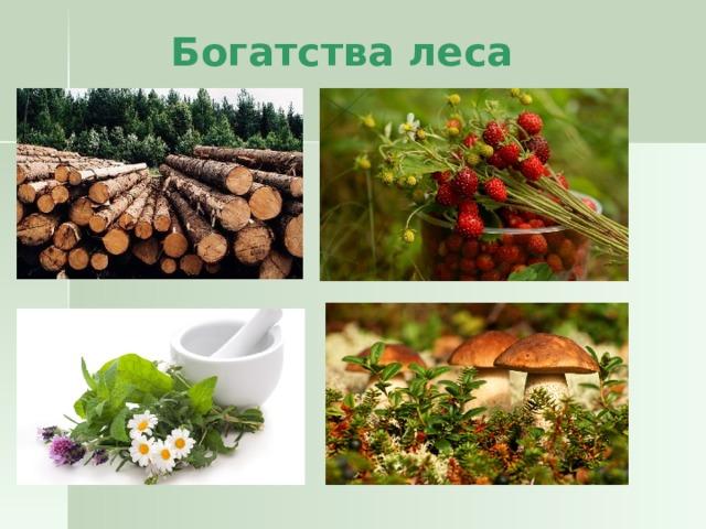 Богатства леса