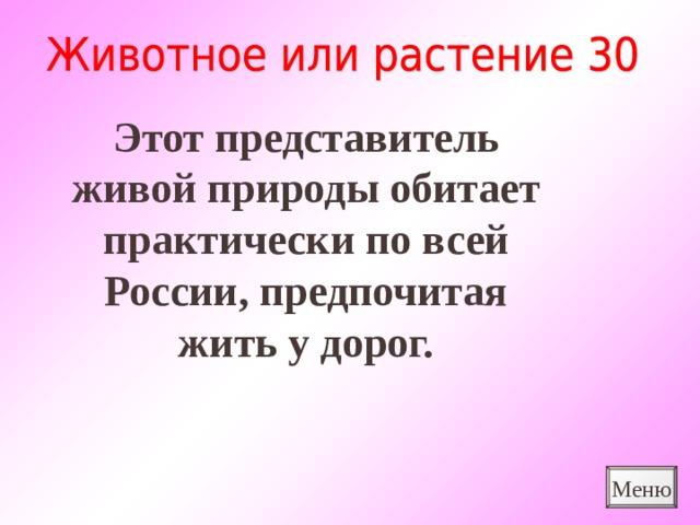 Этот представитель живой природы обитает практически по всей России, предпочитая жить у дорог. Меню