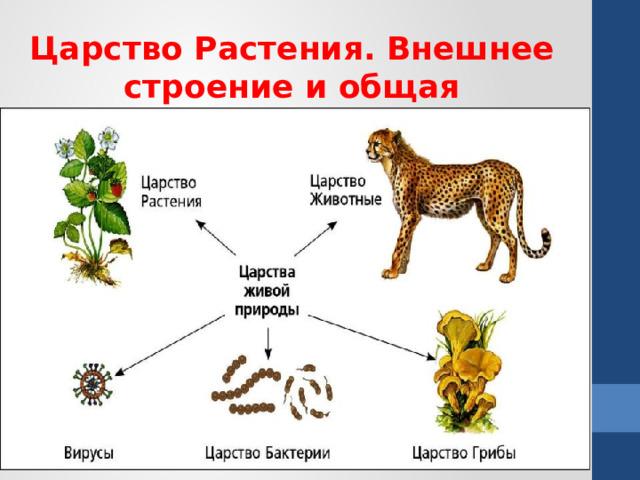 Царство Растения. Внешнее строение и общая характеристика растений