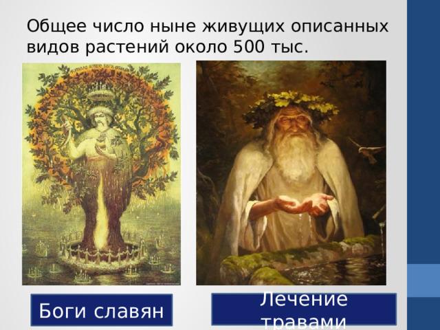 Общее число ныне живущих описанных видов растений около 500 тыс. Лечение травами Боги славян