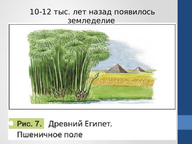 10-12 тыс. лет назад появилось земледелие