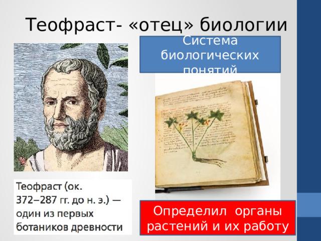Теофраст- «отец» биологии Система биологических понятий Определил органы растений и их работу