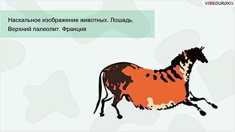 История развития зоологии. Современная зоология
