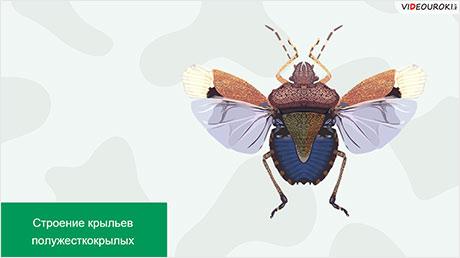 Отряды насекомых: Стрекозы, Вши, Жуки, Полужесткокрылые