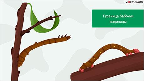 Отряды насекомых: Бабочки, Двукрылые, Блохи