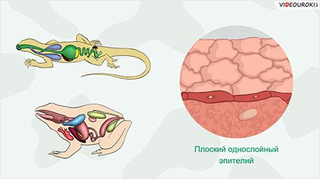 Обобщение по разделу «Многоклеточные животные»