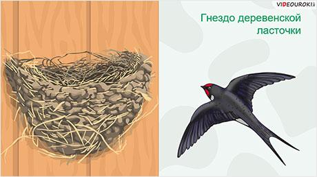 Отряды птиц