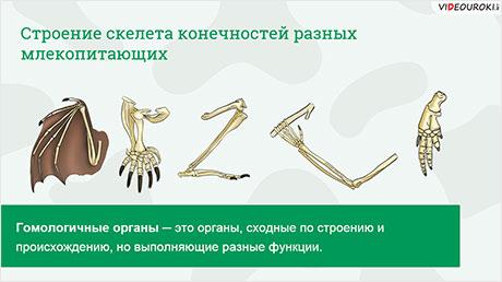 Доказательства эволюции животных