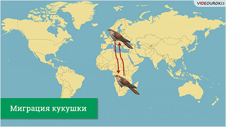 Ареалы обитания. Миграции