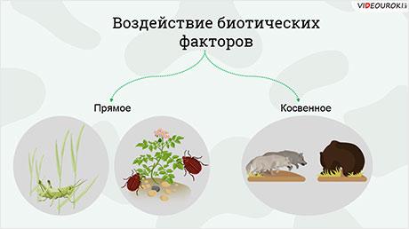Биоценозы. Факторы среды и их влияние на биоценозы