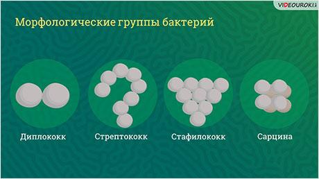 Строение и функционирование прокариотической клетки