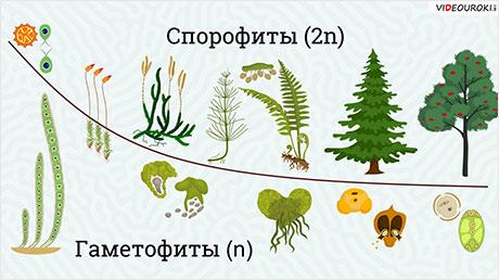 Общая характеристика растений. Низшие и высшие растения