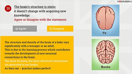 Quiz «The nervous system»