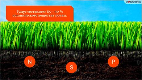 Почвы и факторы их образования. Распространение почв на Земле