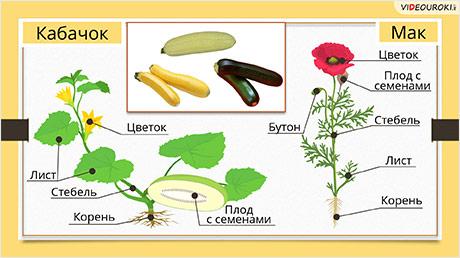 Что общего у разных растений?