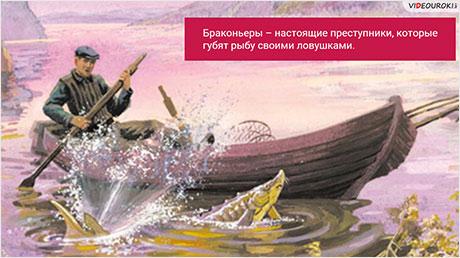 В. П. Астафьев. Взаимоотношения человека и природы в рассказах сборника «Царь-рыба». «Печальный детектив», «Пастух и пастушка»