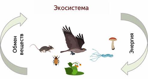 Какие условия для жизни представляет организмам биосфера